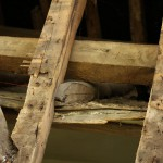 roof_04500_IMG_0634